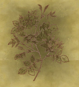 Variations on silk batik: Botanical drawing used on manipulated background.