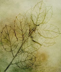 Botanical background3: botanical drawing