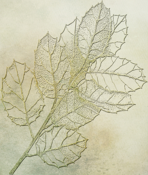 Botanical background: Botanical drawing was used for this background