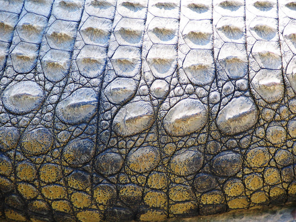 Crocodile Skin Au Naturel 2: Crocodile Skin the way it's meant to be. On a crocodile.