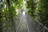 Bridge over the trees: A steel bridge near the Arenal volcano in Costa Rica that allows to explore the richness of the forest from above.