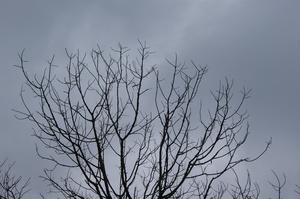 Escaping from death...without : Dead branches tend to escape from death... towards a dead sky.