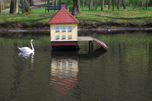 Swan and his house 3: Sawan guarding the house on the pond in the city park