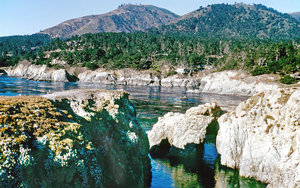 Point Lobos: Point Lobos near China Cove in California, USA