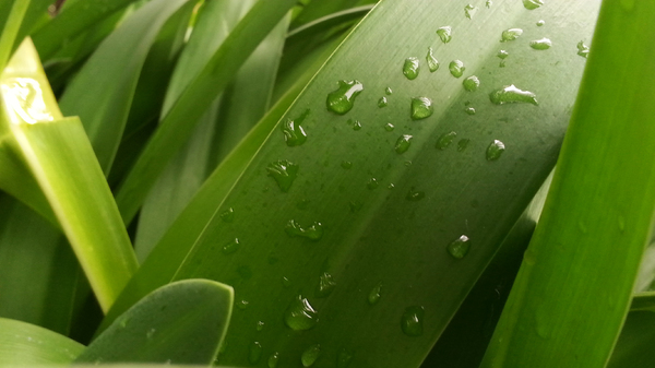 Plants 1: Water drops on a plant