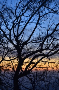 Sunset tree silhouette: A silhouette of a dry tree against a colour-layered sunset in Shimla, India.