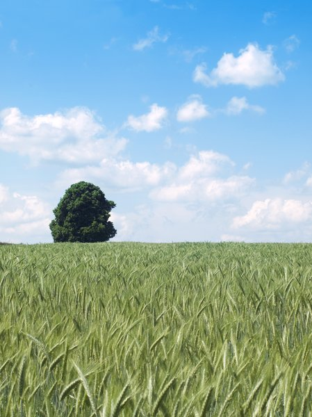 .landscape.: landscape with tree