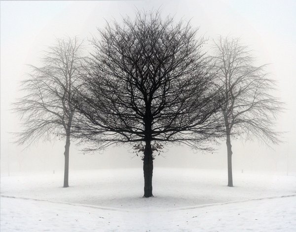 winter: misty winter trees