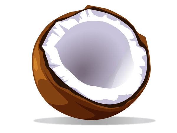 coconut vector: vector of a coconut