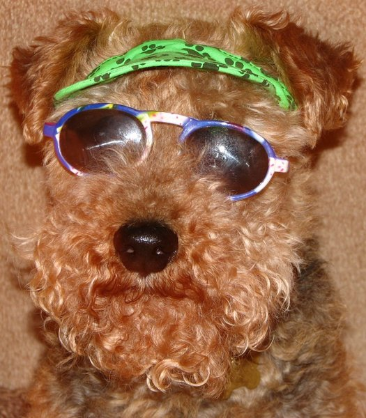 Cool Doggie: This is my dog Oliver He is a Welsh Terrier
