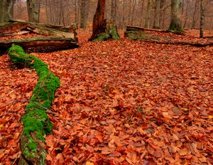 Autumn forest - HDR: No description