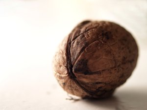 Walnut: walnut isolated