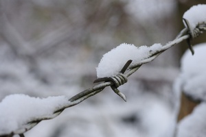 Barbed wire and snow: Barbed wire covered in snow