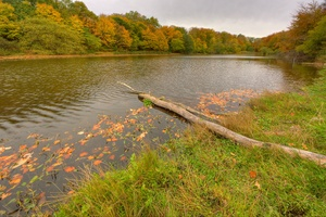 Autumn lake - HDR: Small lake with autumn colored trees in the background and an old log in the front. The image is HDR.