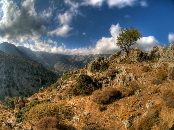 On the top - HDR: A single tree on a mountain top in Crete, Greece. The picture is HDR using nine images.