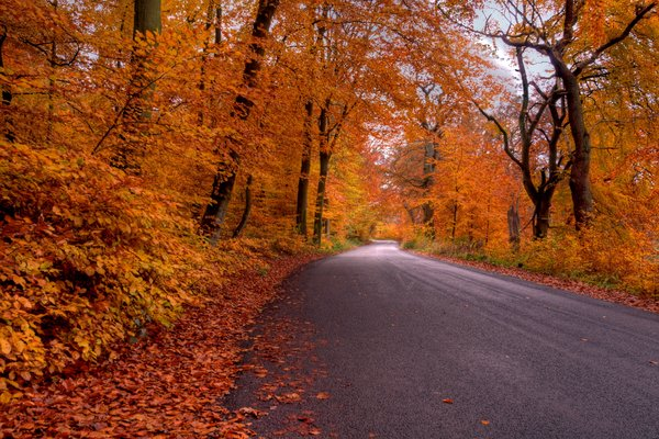Forest road - HDR: A road passing though the autumn colored forest. The picture is HDR