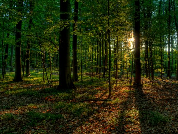 Summer forest - HDR: The picture is HDR using 7 images