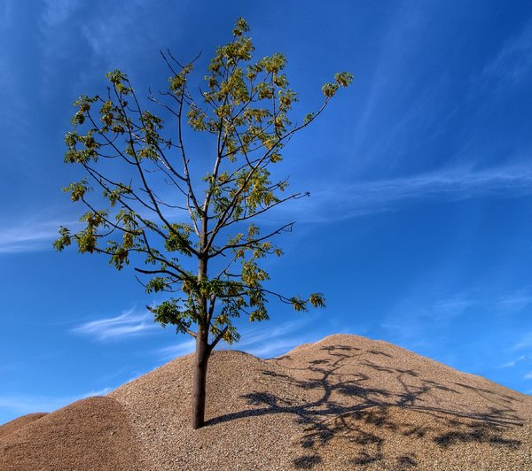 Tree and gravel - HDR: A lonely tree standing in a pile of gravel. The picture is HDR using 3 images.