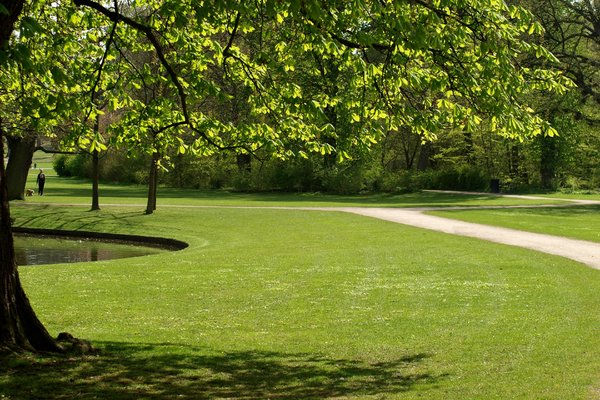 Park in spring colors: Park in spring with the clear green colors