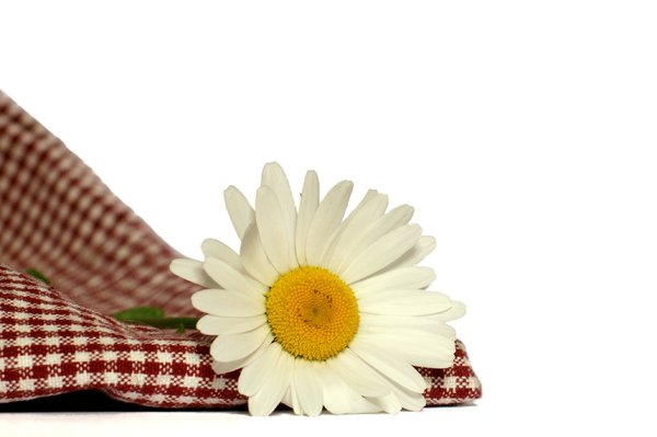 Margerit and chequered tablecl: White Margerit and red chequered tablecloth