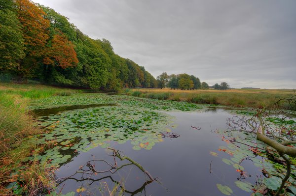 Autumn - HDR: Small pond/lake at the edge of the forest. The image is HDR.
