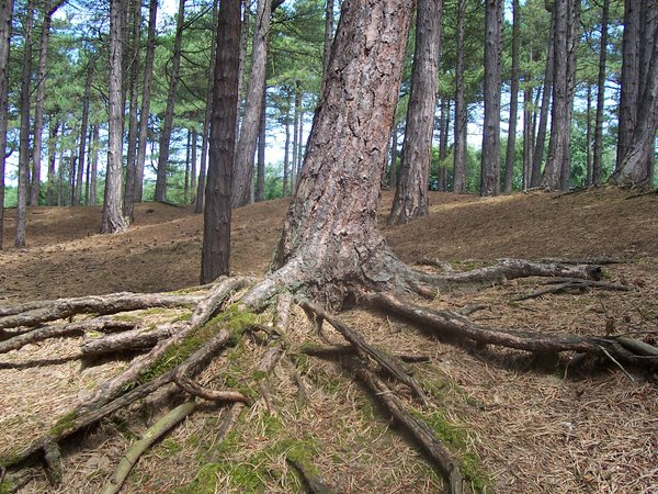 Roots of a tree: A photograph of the roots of a tree