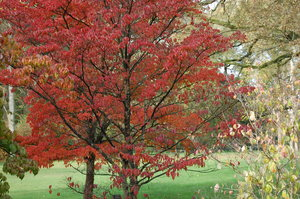 Fall2010: pictures from the arboretum De Lutte