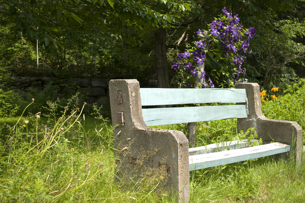 Bench: Park bench in a field of flowers