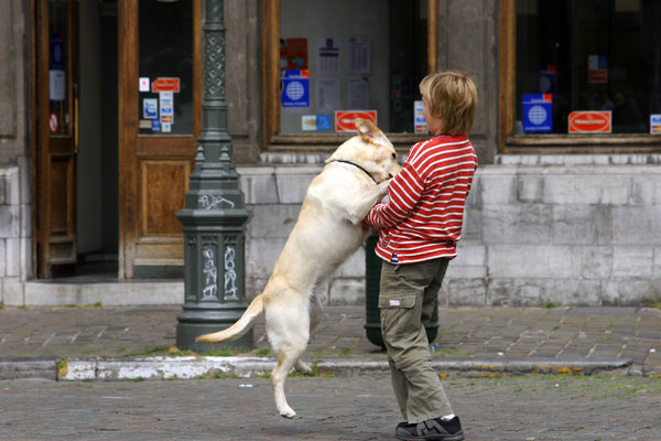 boy and his dog: boy playing with dog