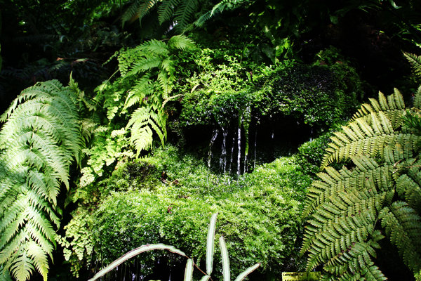jungle feeling: in an arborium
