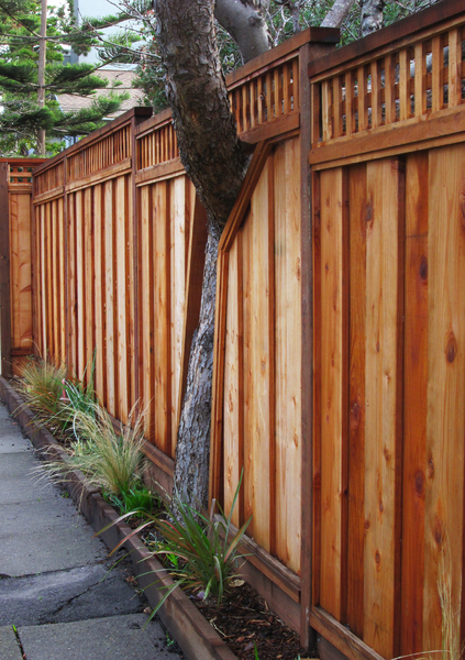 Tree/Fence: This new wooden fence was clearly built to accommodate this old tree.
