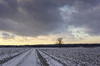 Dirt Road on icy Fields: Dirt Road on frozen Fields, single Oak Tree and Spruce Forest in Background