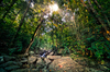 Sunburst in deep dark Jungle: