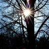 Sunburst in Tree: Special 14-Point Suburst of the Minolta 70-210 f4 Beercan