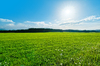 Green Field Landscape: Green Field Landscape near Forest, blue Sky