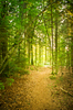 Path in natural Forest: Footpath in natural Forest