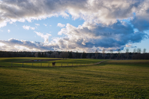Farmland with Horse walking: Farmland with green Meadows on rolling Hills, Horse walking along Fence
