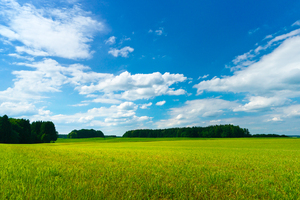 Green Meadows - blue Sky: Summer Landscape - green Meadows with Groups of Trees, blue Sky with white Clouds