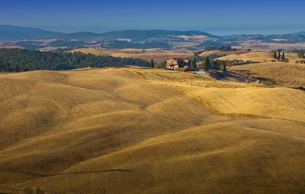Tuscany Farm in Fields: Farm and Fields on rolling Hills, Tuscany