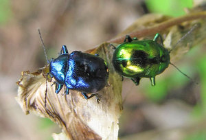 Jewel Bugs: no description