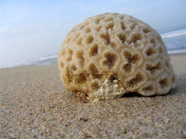 coral: coral on the beach