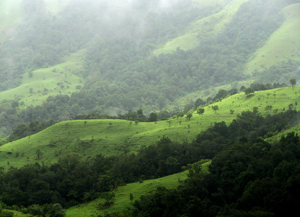 Shola Grasslands: The Shola Grasslands and forests in the Kudremukh National Park, Western Ghats, India. The Park is about 600 Sq. km in area and is one of the 25 biodiversity hot spots in the world.