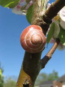 Snail in the Apple Tree: no description
