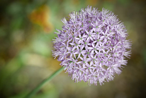 FlowerBall: A natural ball made of little small flowers