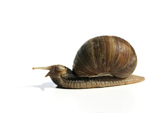 snail senior: none