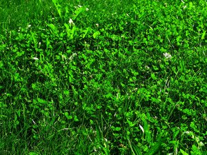 green grass: none