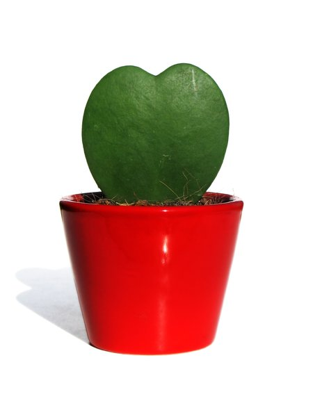 love cactus: none