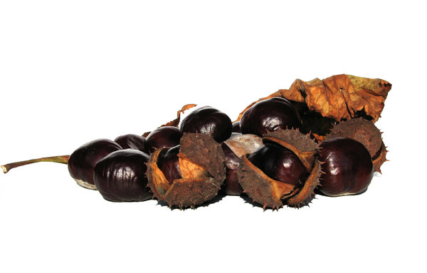 chestnuts 1: none