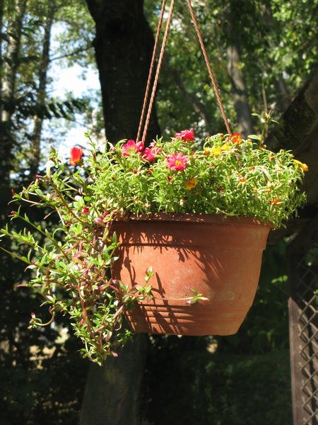hanging flower basket: none