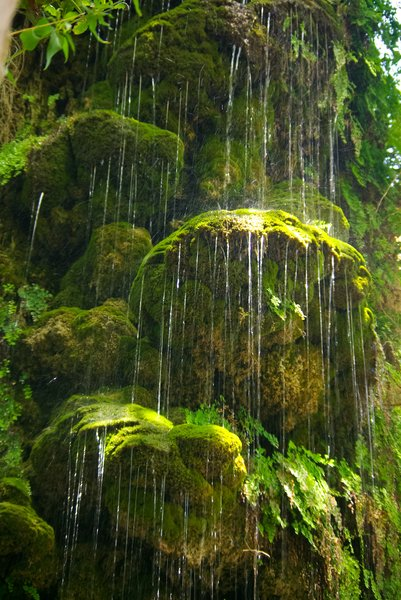 Green waterfall: La Granja, situated 15 km west of Palma, Mallorca is a beautiful 10th century mansion, surrounded by lush vegetation, beautiful gardens and natural fountains. This is one of the waterfalls over old moss stones.